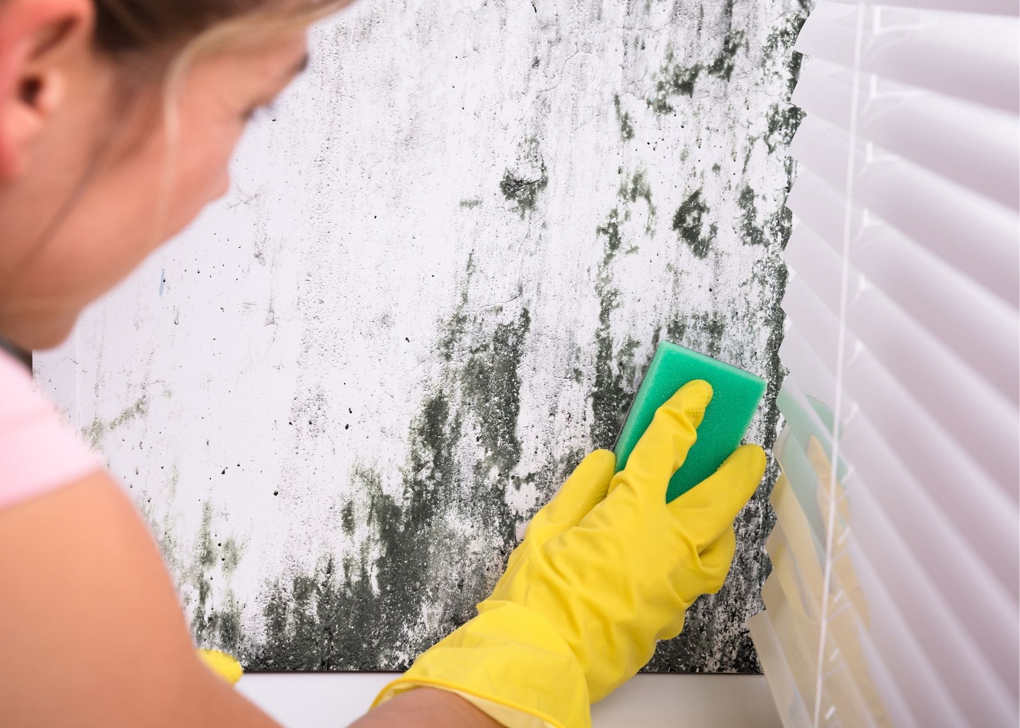 mold removal in Tulsa OK